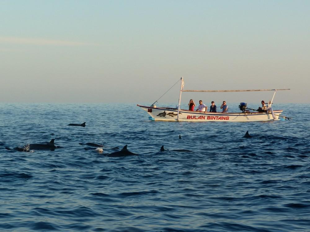 tips-bali-twee-weken-lovina-dolfijnen
