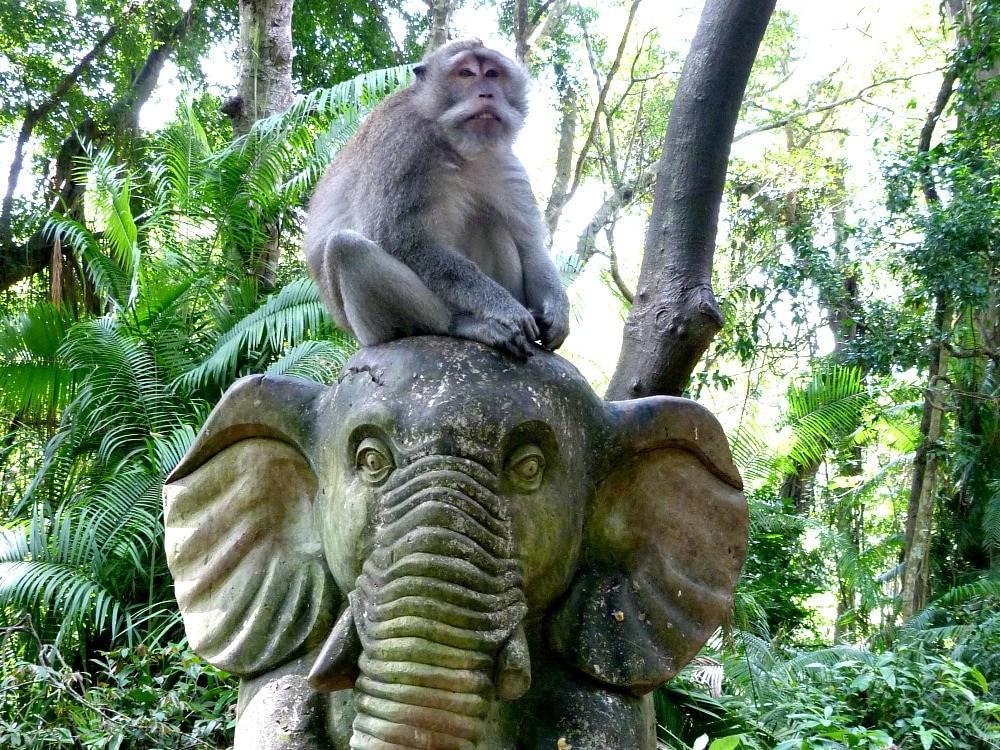 ubud-bali-tips-monkey-forest-min