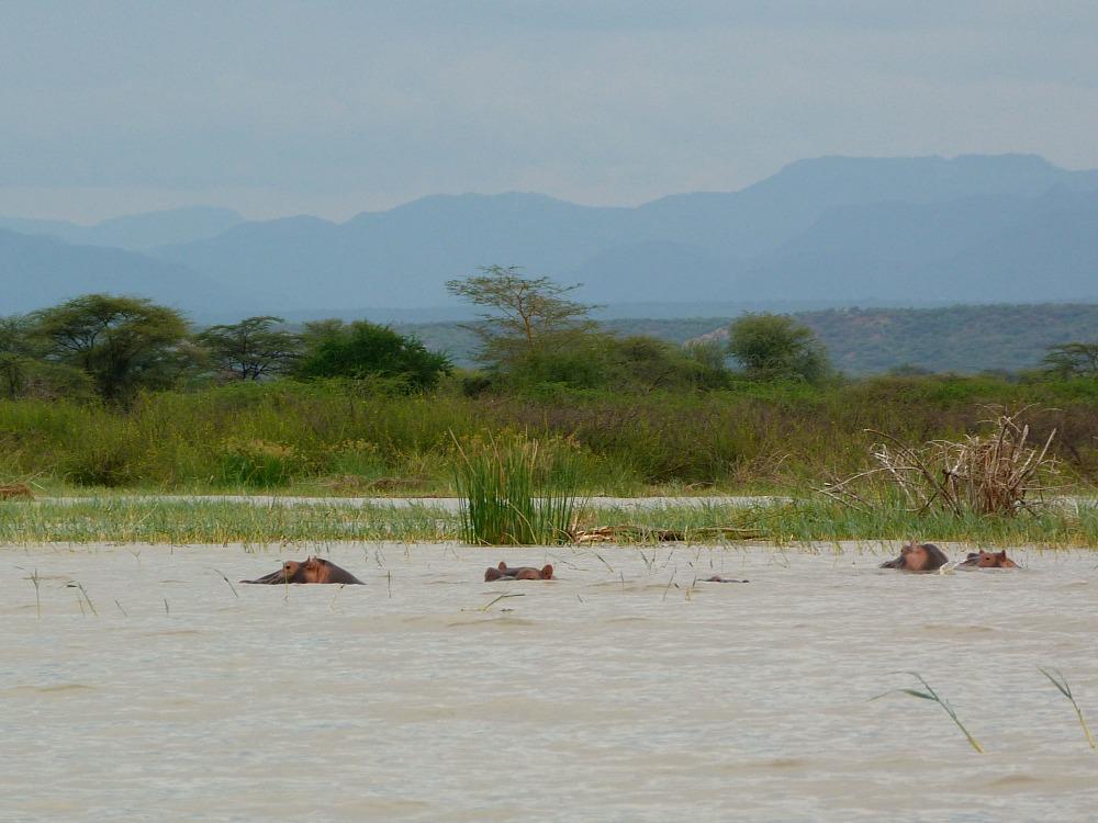 kenia-nijlpaarden-lake-baringo