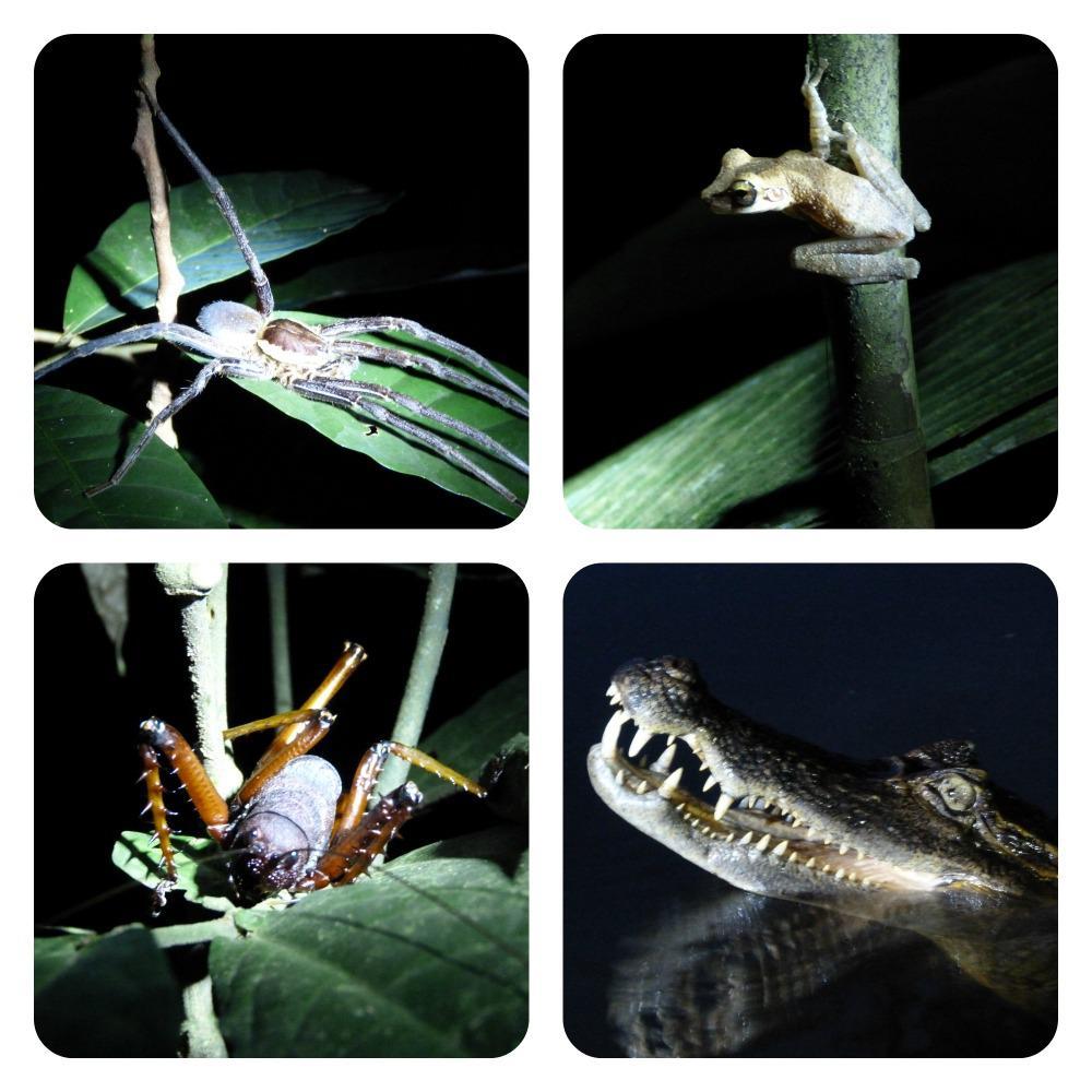amazone-cuyabeno-dieren-nacht
