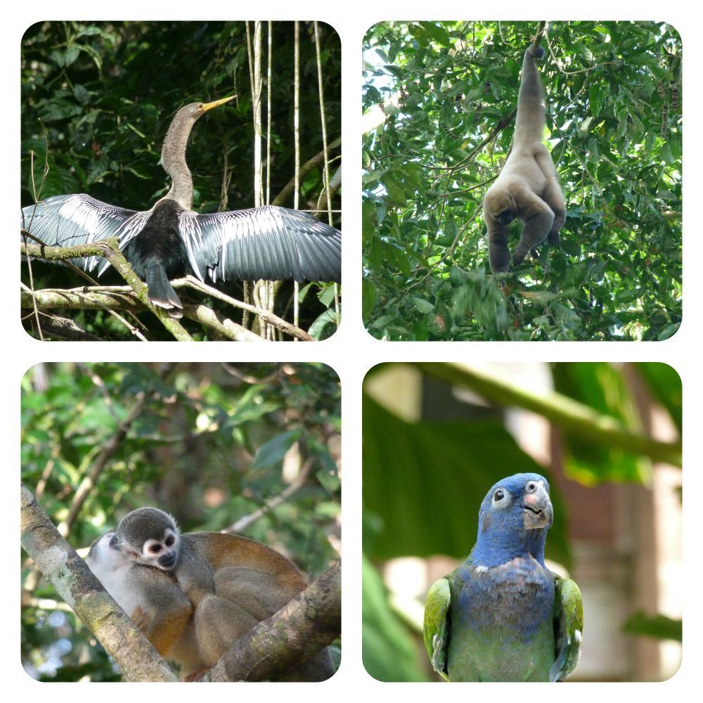 amazone-cuyabeno-dieren-overdag