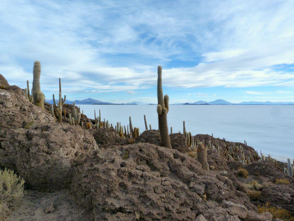 bolivia-salar-uyuni-cactussen