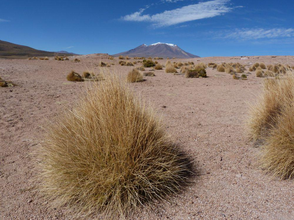 bolivia-vulkaan-uyuni-bosjes