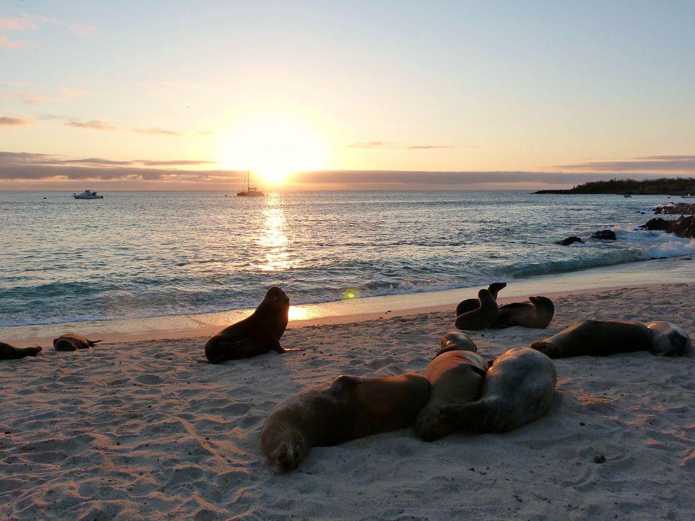 ecuador-galapagos-san-cristobal-playa-mann-sunset