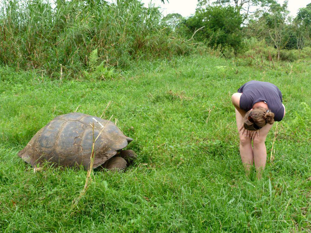 ecuador-galapagos-santa-cruz-schildpad-kijken