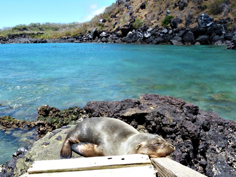 san-cristobal-galapagos-budget-zeeleeuw