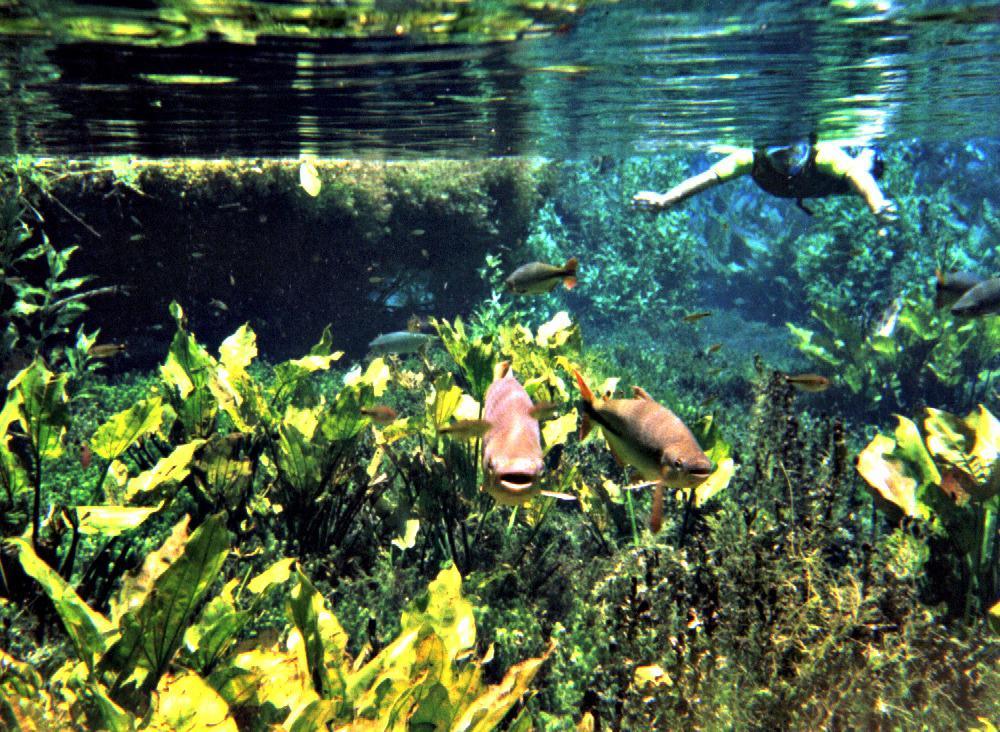snorkelen-bonito-brazilie