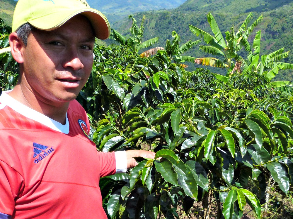 salento colombia koffie