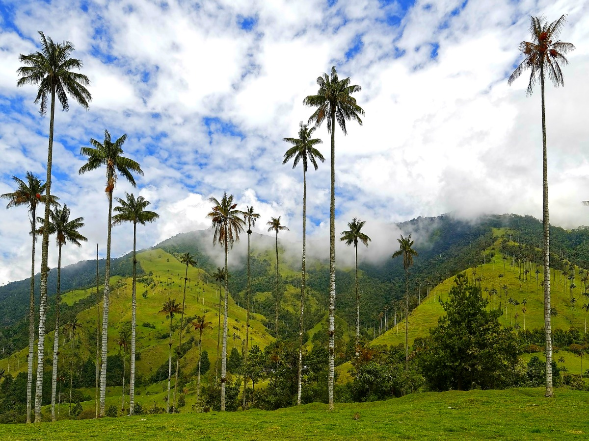 salento cocora colombia