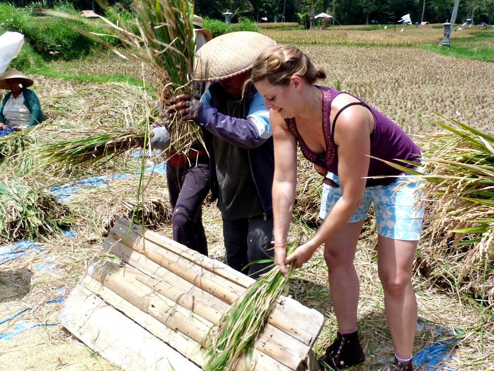 rijst excursie