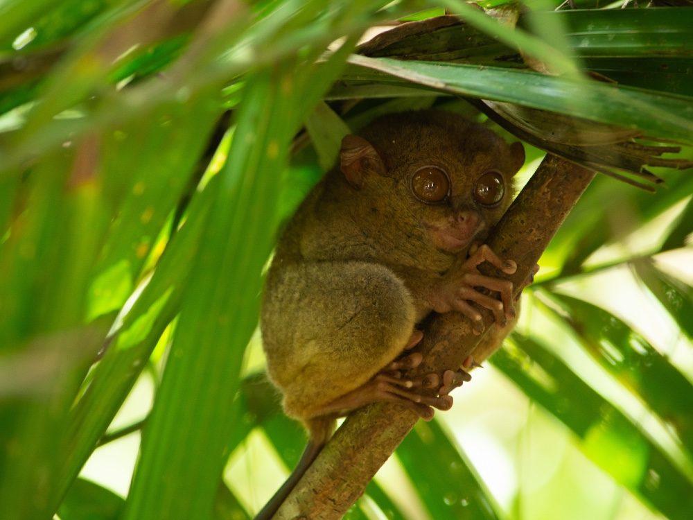 indonesie reis eilanden kiezen - spookdiertje