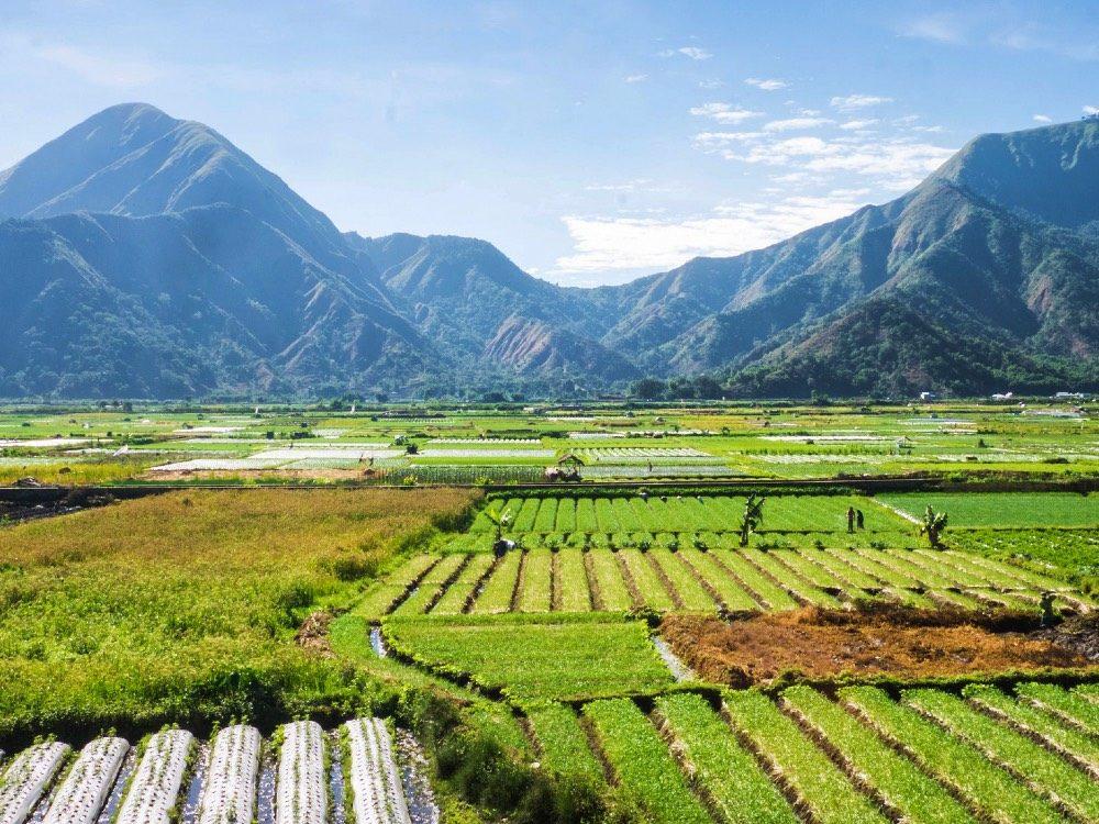 indonesie reis eilanden kiezen - rijstvelden